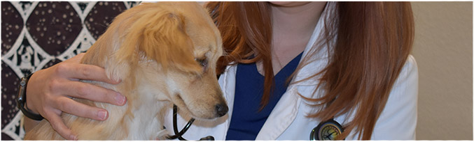 A puppy being treated at Bingle Vet Clinics