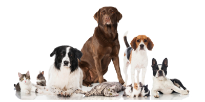 Free Dog and Cat Exam Offer