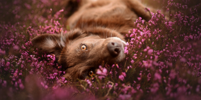 Does your pet suffer from severe allergies?